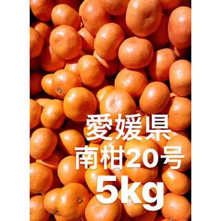 愛媛県 南柑20号 みかん S前後 5kg(フルーツ)