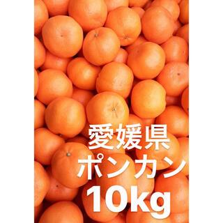愛媛県 ポンカン 小玉 10kg(フルーツ)