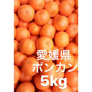 愛媛県 ポンカン 小玉 5kg(フルーツ)