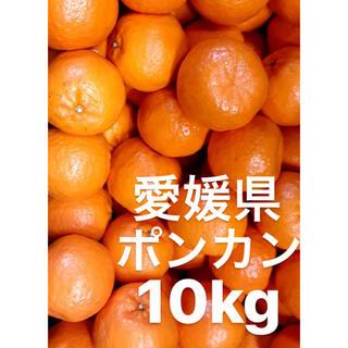 愛媛県 ポンカン 10kg(フルーツ)