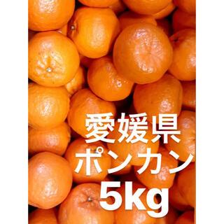 愛媛県 ポンカン 5kg(フルーツ)