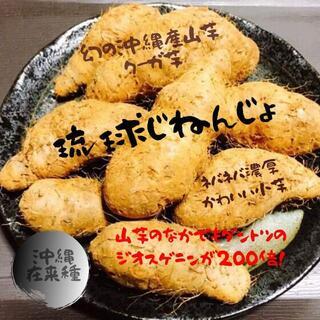 今季初物!幻のじねんじょ?琉球自然薯!沖縄産クーガ芋コンパクトにぎっしり2kg(野菜)