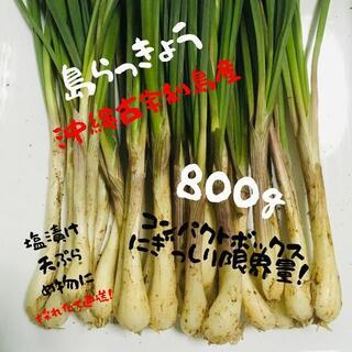 大好評! ここだけ!「恋島 古宇利島」島らっきょう800g!(野菜)