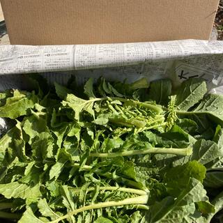 完全無農薬、新鮮、大根葉(野菜)