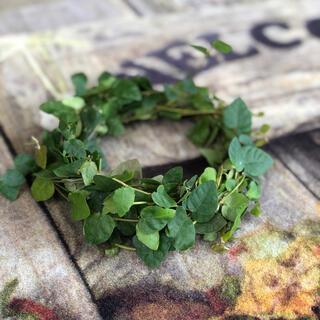 シンプルなミニリース 観葉植物 グリーン 自然素材 ナチュラル 花材 Y(ドライフラワー)