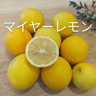 国産マイヤーレモン 約2キロ(フルーツ)