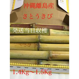 さとうきび 沖縄離島産 発送当日収穫 サトウキビ(野菜)