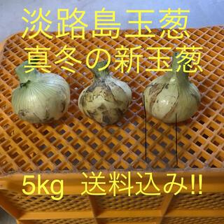 淡路島玉葱 真冬の新玉葱 5kg(野菜)