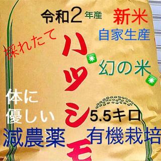 令和2年✳️減農薬、有機肥料 特別栽培米 選別一等米ハツシモ  5.5キロ(米/穀物)