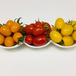 アイコ 3種3kg(野菜)