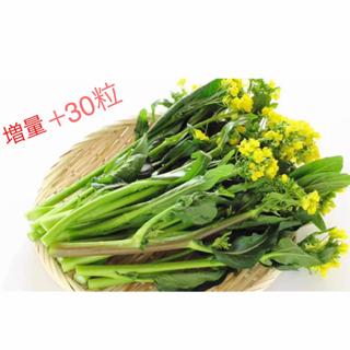 風味抜群美味しい❗️❗️ 次々収穫できる『アスパラ菜』 種50粒+30❣️(野菜)