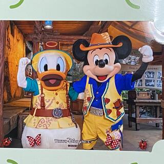ディズニー(Disney)のディズニー トレイル フォトファン(写真)