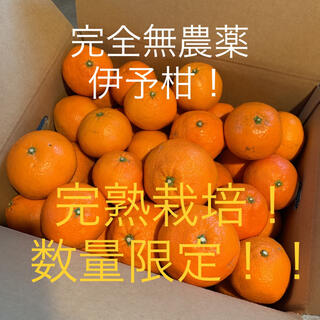 愛媛 完全無農薬イヨカン 5キロ(フルーツ)