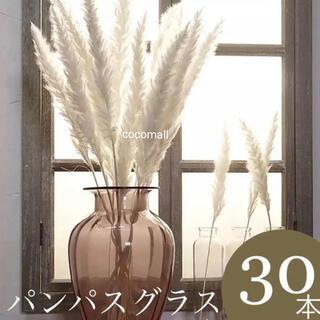 【92様専用】パンパスグラス ホワイト 30本(ドライフラワー)