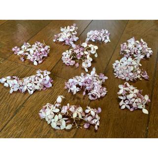 銀の紫陽花が作ったピンクアナベルのドライフラワー10房‼️(ドライフラワー)