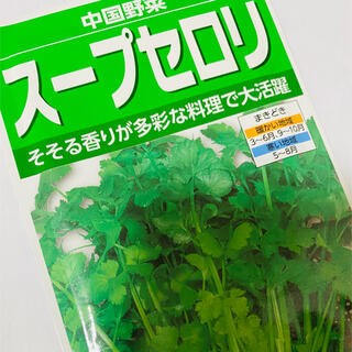 ハーブセロリ(スープセロリ)野菜の種  30個(野菜)