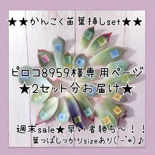 ピロコ8959様専用ページ‼️‼️おまとめ割¥50引き(その他)