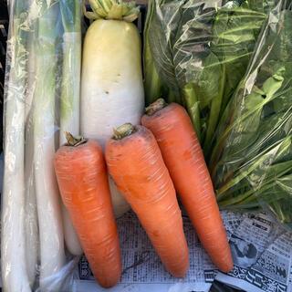 冬野菜セット 6品