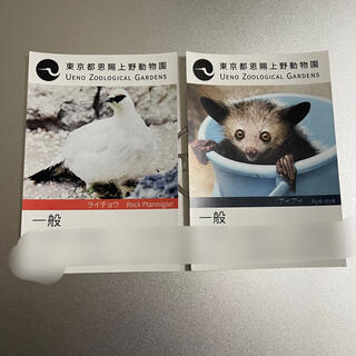 上野動物園 チケット2枚(動物園)