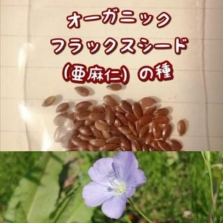 【家庭菜園に水色のお花を】オーガニックフラックスシード +おまけの種(野菜)