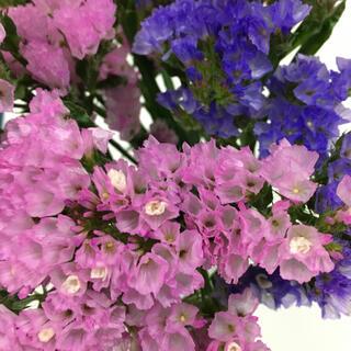 ドライフラワー スターチス ピンクと薄紫(ドライフラワー)