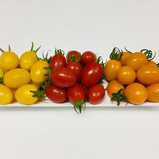 アイコ 3種 3.5kg(野菜)
