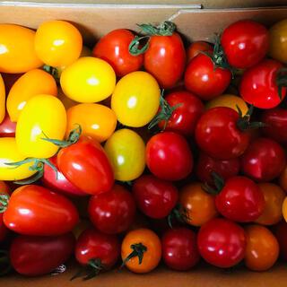 ミニトマト8種セット 1.8キロ(野菜)