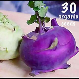 ◆パープルコールラビ◆ 【無農薬種子】ヨーロッパの家庭の味♡ 30粒(その他)