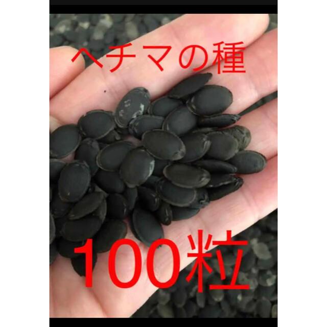 ヘチマの種100粒 食品/飲料/酒の食品(野菜)の商品写真