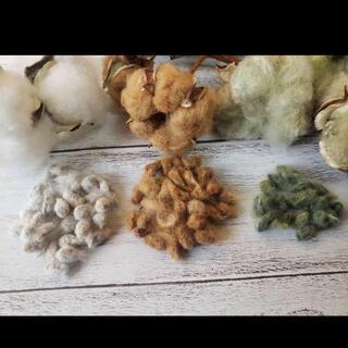 綿の実 種 コットン 種 綿花 白&茶&緑 3色(その他)