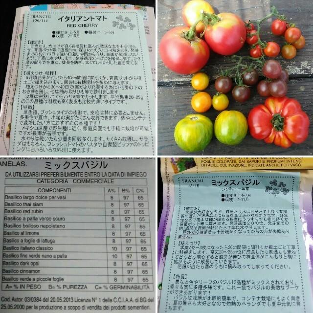 イタリア野菜の種 支柱いらずのミニトマト&12種類ミックスバジル プランターOK ハンドメイドのフラワー/ガーデン(その他)の商品写真