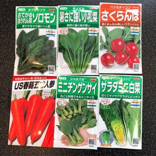 野菜の種 セット 5種類(野菜)