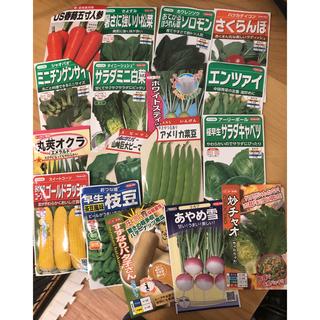 野菜の種 セット 4〜8種類(野菜)