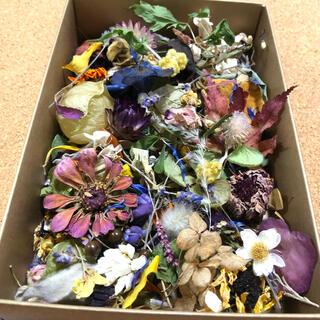 [訳あり品]花材増量パック 小花と花びらと葉と木の実 ドライフラワー A(ドライフラワー)