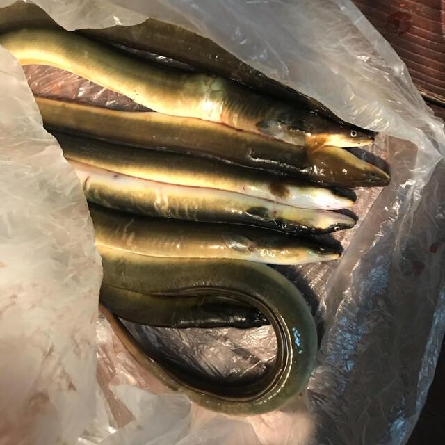SHIMANO(シマノ)のうなぎ仕掛け うなぎ釣り仕掛け スポーツ/アウトドアのフィッシング(釣り糸/ライン)の商品写真