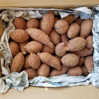 (傷あり)長崎県産さつまいも(安納)4kg(野菜)