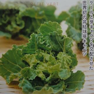 ☆【プチヴェールたっぷり300g】農家直送!!(野菜)