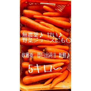 5キロ 人参 無農薬♪(野菜)