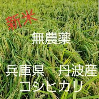 令和2年 兵庫県丹波産 無農薬コシヒカリ20キロ(米/穀物)