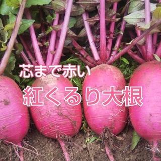 【農家直送】紅くるり大根2㎏(野菜)