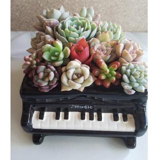 ピアノ型鉢の寄せ植え