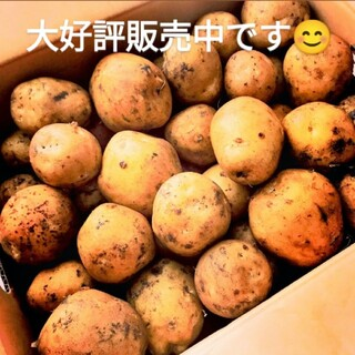 北海道産 新品種 じゃがいも「とうや」3㎏(野菜)