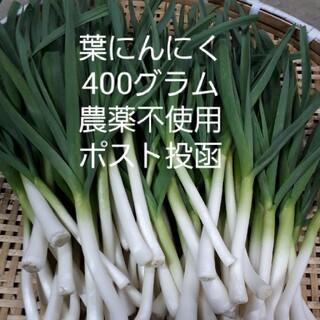 葉にんにく(ポスト投函)農薬不使用栽培(野菜)