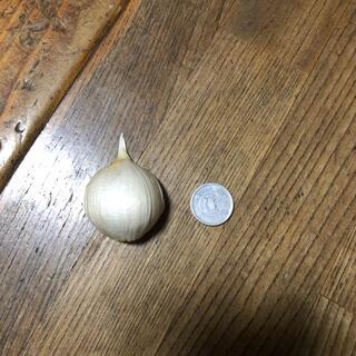 青森県産 ニンニクバラ大粒多め 700g(野菜)