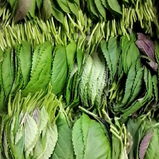 えごまの葉っぱ 100枚(野菜)