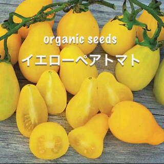 ◆イエローペアートマト◆可愛く甘い洋梨型のミニトマト【オーガニック種子 10粒】(その他)