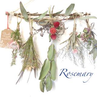 香り立つ無農薬 葉付き銀世界ユーカリの木ガーランド ドライフラワーハーブスワッグ(ドライフラワー)