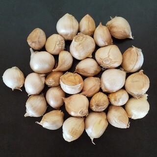 熊本県産 ジャンボニンニク(小) ばら300g(野菜)