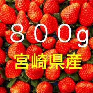 宮崎県産 ‼️ 収穫当日発送☆彡 ▼ 採れたてイチゴ ▼ 800g❗️(フルーツ)