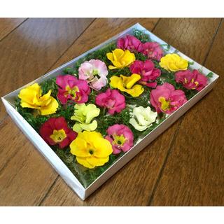 ⑤ 銀の紫陽花が作ったバラ咲きジュリアンのドライフラワーset(ドライフラワー)